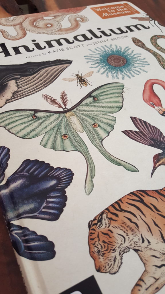 Animalium by Jenny Broom and Katie Scott